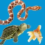 Poissons et Reptiles