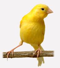 Bien nourrir son oiseau domestique vitakraft for Oiseau domestique interieur