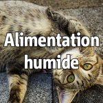 Alimentation humide
