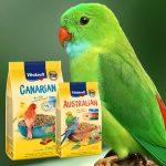 Alimentation Oiseaux domestiques