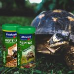 Tortues et reptiles